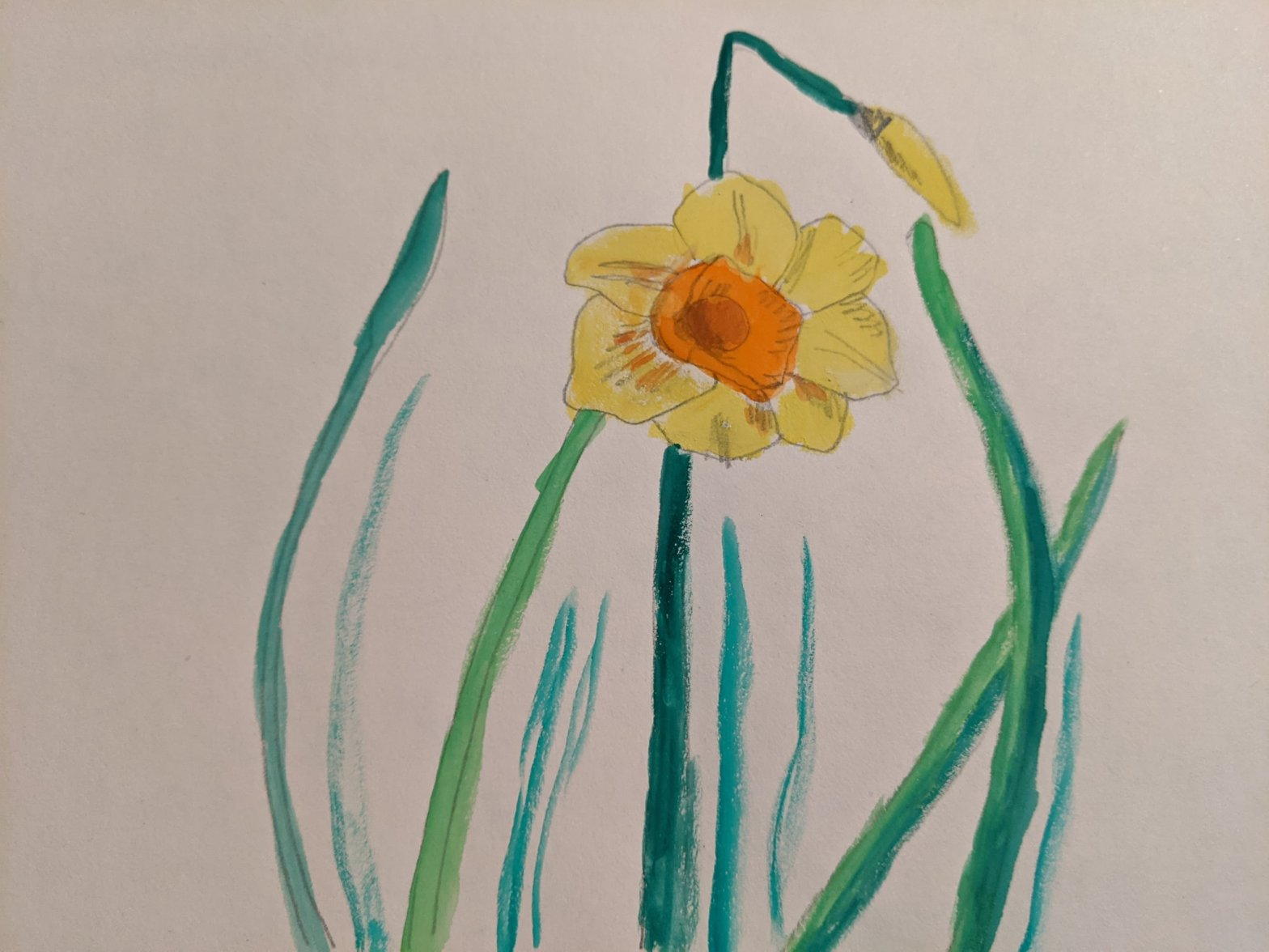 Daffodil in watercolour | Sandra Burns Art