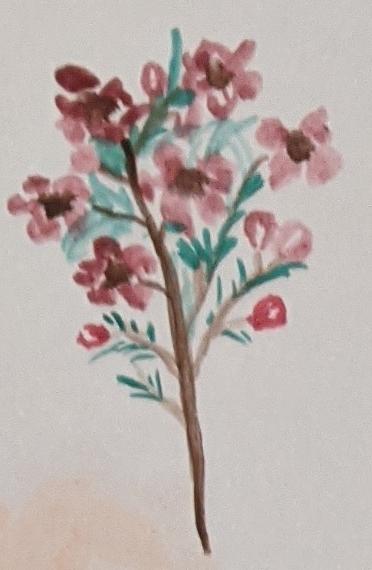 Sketchbook Art - Watercolour Flowers - Sandra Burns Art