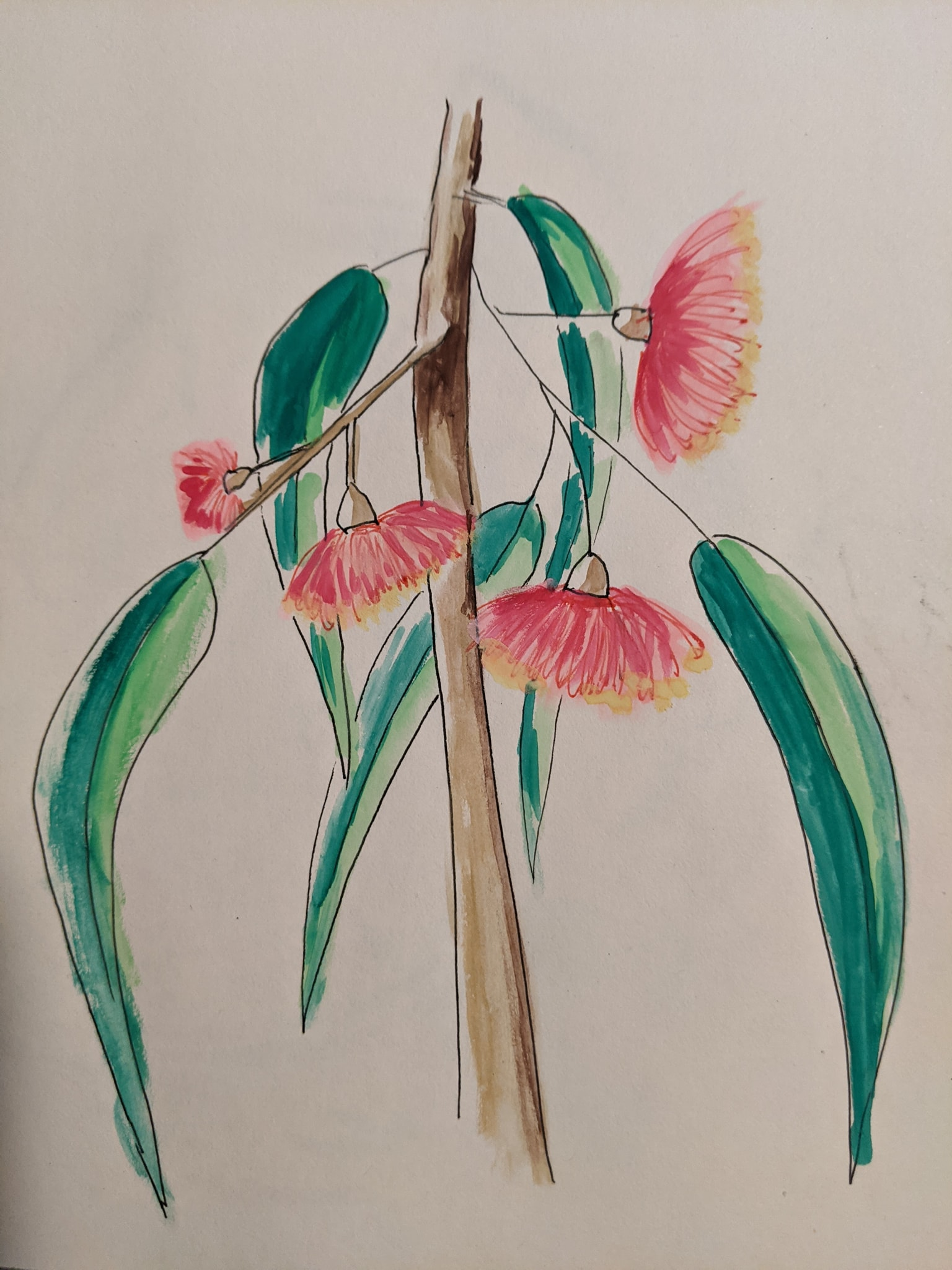 Gum Tree Flowers in watercolour | Sandra Burns Art
