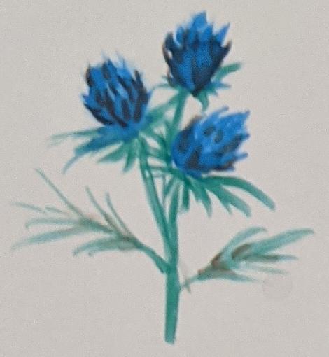 Sketchbook Art - Watercolour Flowers - Thistle - Sandra Burns Art