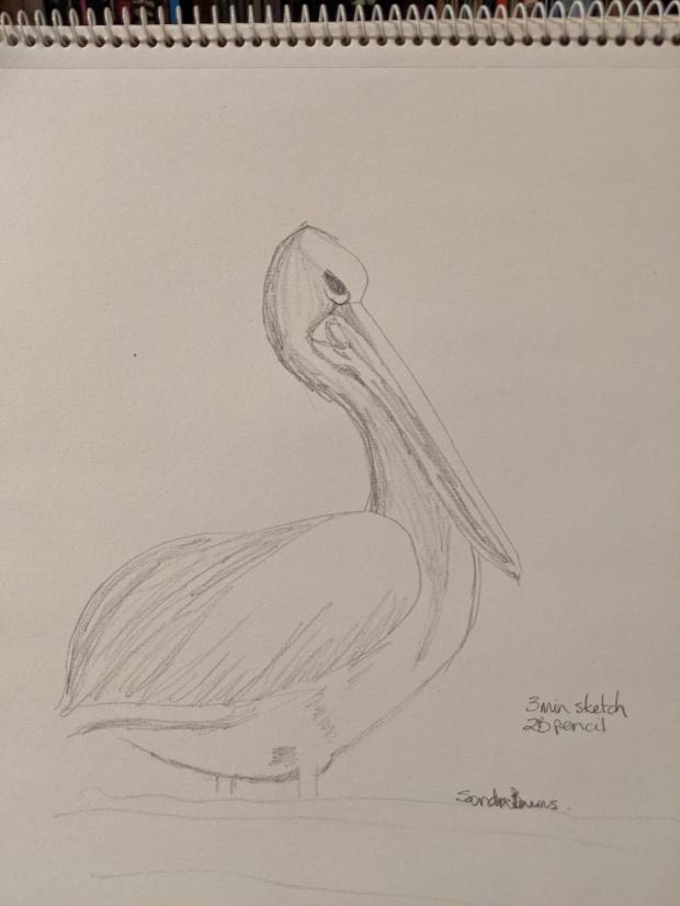 The Pelican | Sandra Burns Art
