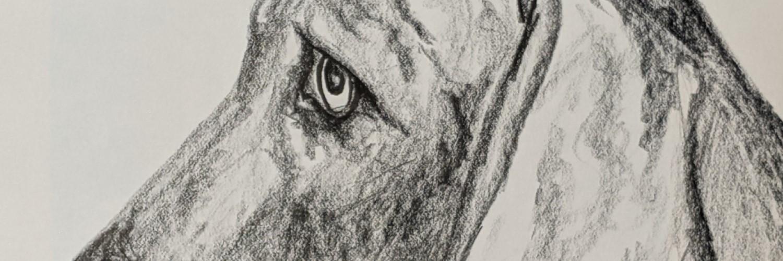 Pet Portrait Weimaraner | Sandra Burns Art