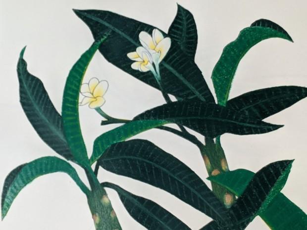Frangipani (plumeria rubra) | Sandra Burns Art