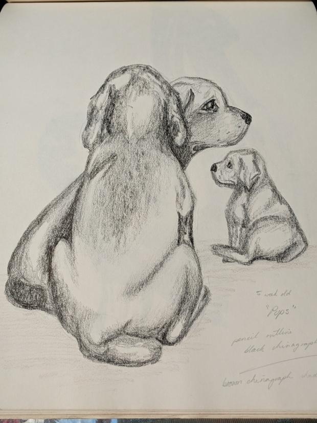 Weimaraner Puppies   Sandra Burns Art