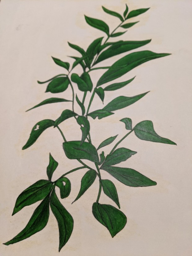 Plant Life   Sandra Burns Art