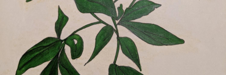 Plant Life | Sandra Burns Art